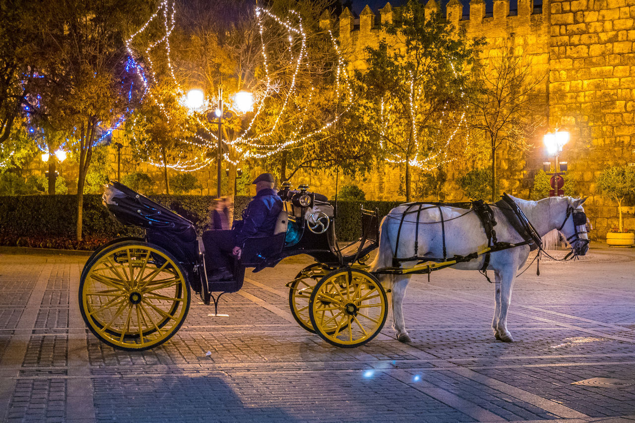 domestic animals, mammal, animal, horse, transportation, animal themes, night, horse cart, domestic, tree, working animal, livestock, mode of transportation, illuminated, pets, animal wildlife, cart, vertebrate, horsedrawn, street, herbivorous, outdoors, riding
