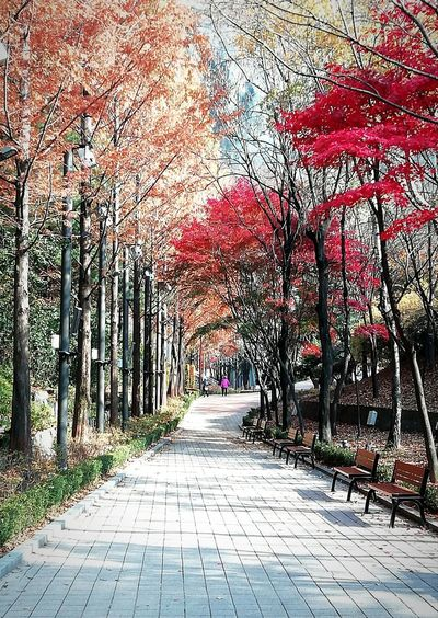 Autumn colours Seoul, Korea Trees Autumn Autumn colors walking park go for a walk Tree cobblestone pathway walkway Treelined woods the way forward vanishing point Benches Bench Seat People In The Distance Travel Scenics - Nature Travel Destinations Seoul, Korea Trees Autumn Walking Park Go For A Walk Tree Cobblestone Pathway Walkway Treelined Woods The Way Forward Paved Lane Street Scene Diminishing Perspective vanishing point