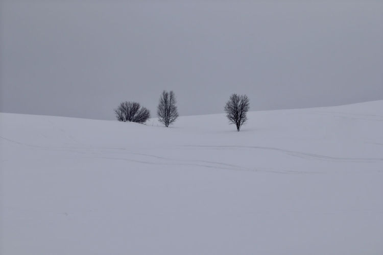 Winter Snow Cold Temperature Tranquility Beauty In Nature Tranquil Scene Plant Field Environment Land Tree Nature No People Covering Scenics - Nature Landscape Sky White Color Day Outdoors Snowing Minimalism
