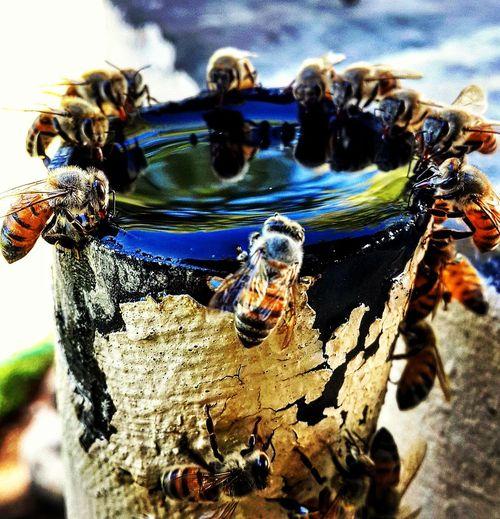 Nikonphotography Nikon D3200 South Africa Nature Photography Amaturephotography A Bird's Eye View Macro Honey Bees  Kalahari Water Escaping The Heat