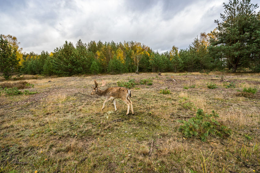 Deer on a meadow in Wildlife Refuge Animal Themes Animal Wildlife Animals In The Wild Beauty In Nature Day Deer Grass Landscape Mammal Nature No People One Animal Outdoors Sky Tree