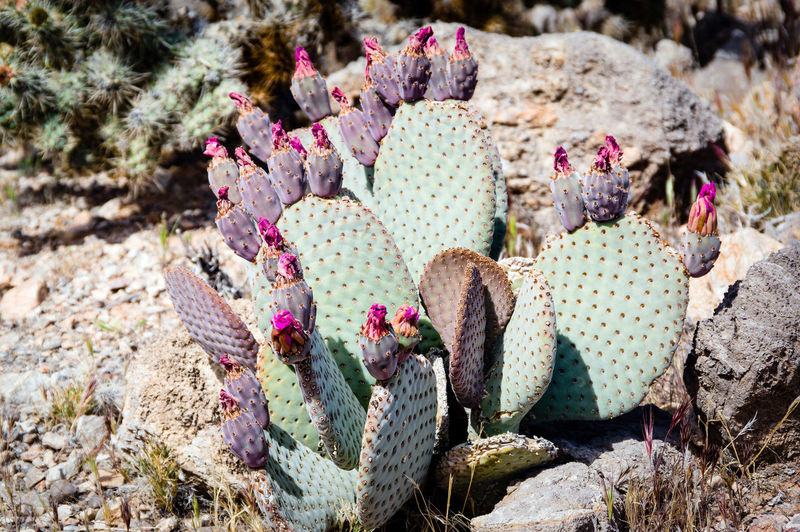 High angle view of succulent plant growing on rock