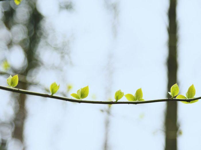 Tree Plant Part