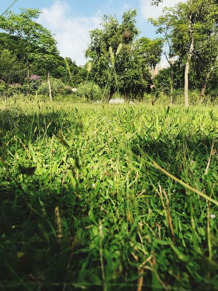 Nature Plant Growth Green Color Nature Grass Tranquility Beauty In Nature EyeEmNewHere