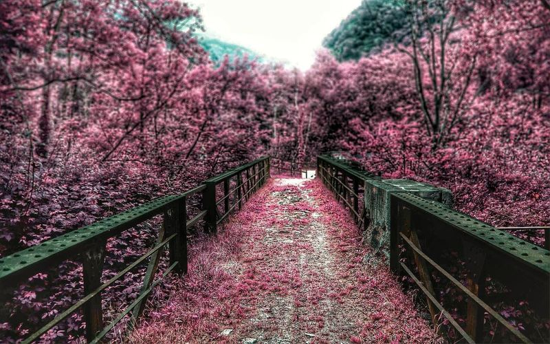 Bridge Pink Trees WOW HDR Hdr_Collection Amazing View Photography Nature Hdr Edit Relaxing