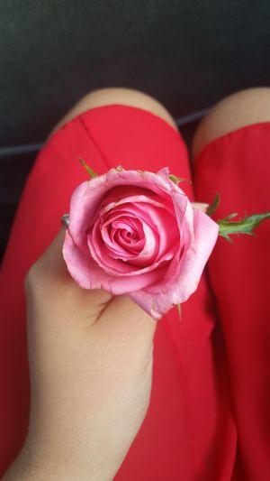 🌹 Flower