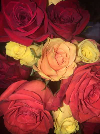 Roses Flowers Beautiful Yellow Red Orange Yellow Flower Red Rose