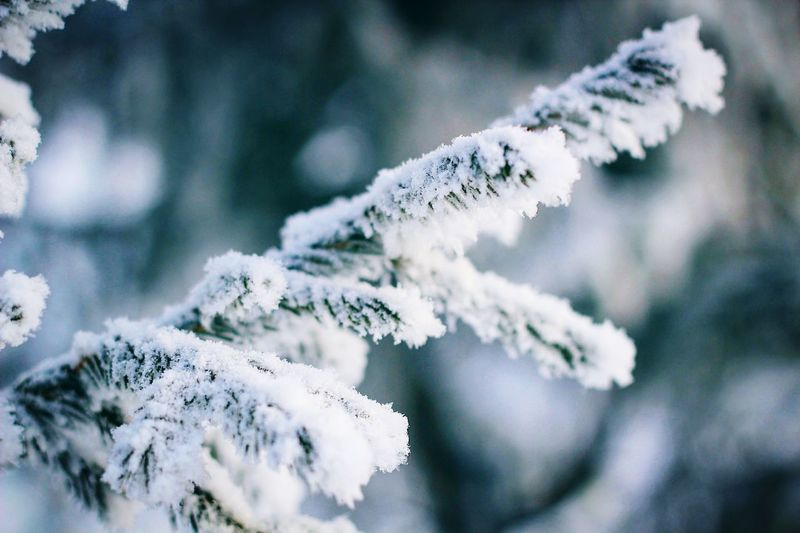 Cold Temperature Winter Snow Weather Nature Frozen Beauty In Nature White Color Ice Frost Tree No People Ice Crystal Focus On Foreground Tranquility Day Fragility