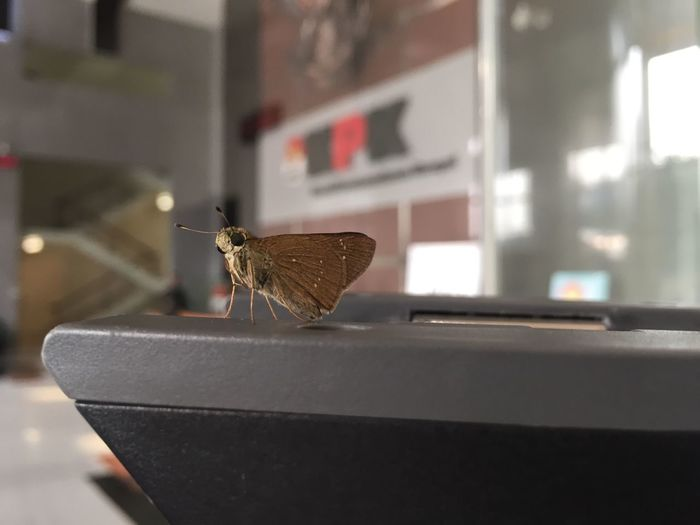 EyeEm Selects One Animal Insect Animal Themes Animals In The Wild Focus On Foreground No People Close-up Animal Wildlife Indoors  Day Perching Nature KPK