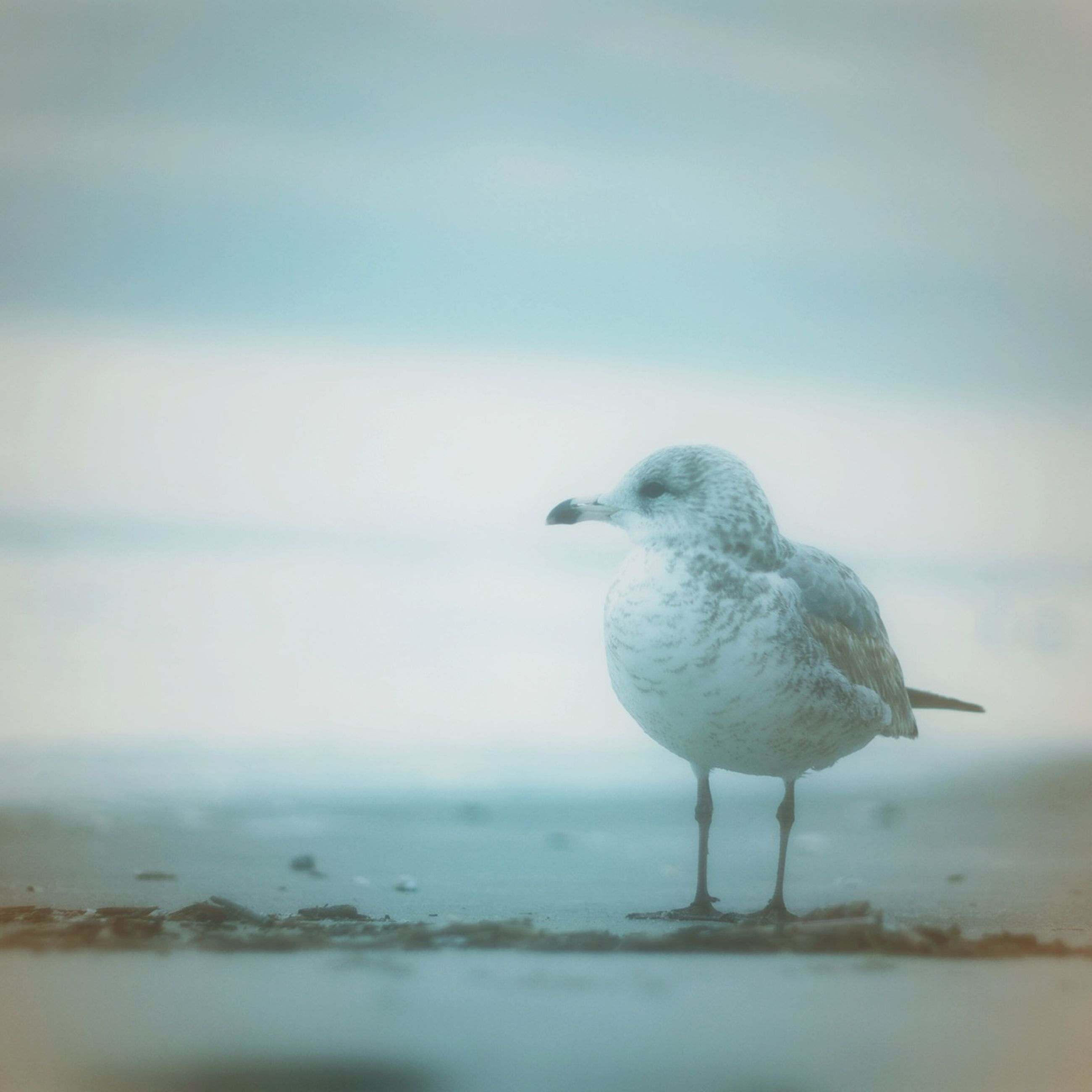 animal themes, one animal, bird, water, animals in the wild, wildlife, sea, nature, seagull, focus on foreground, waterfront, full length, day, perching, close-up, outdoors, side view, lake, sky, no people