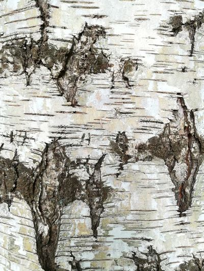 Treeskin 1 Wood Nature Backgrounds Textured  Pattern Abstract