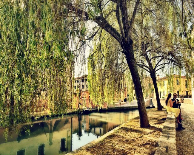 Buranelli Check This Out Weeping Willow My Favorite Place Treviso Veneto IPhoneography Italian Veneto Italy Canal Treviso, Italy Water Peaceful Italy🇮🇹 Walking Around Italy Old Town Taking Photos Bridge Hidden Gems