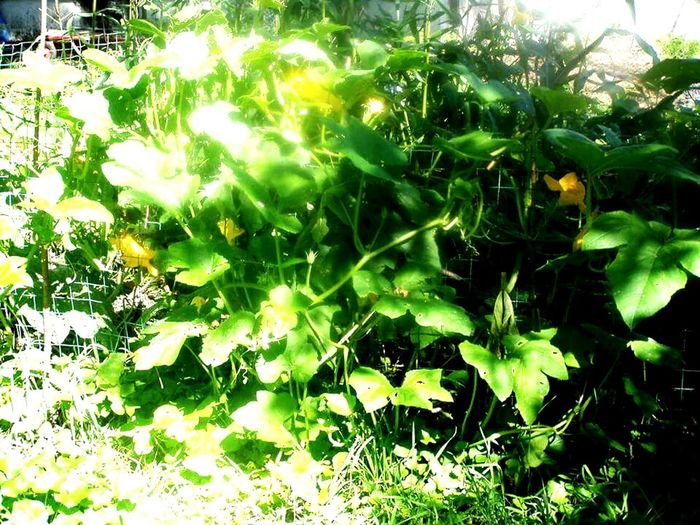 The Changing City Urban Gardens Detroit, MI Food Desert The Great Outdoors With Adobe 43Golden Moments