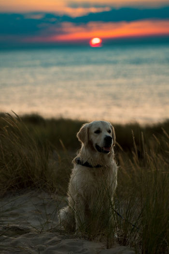 Dog Sitting At Beach During Sunset