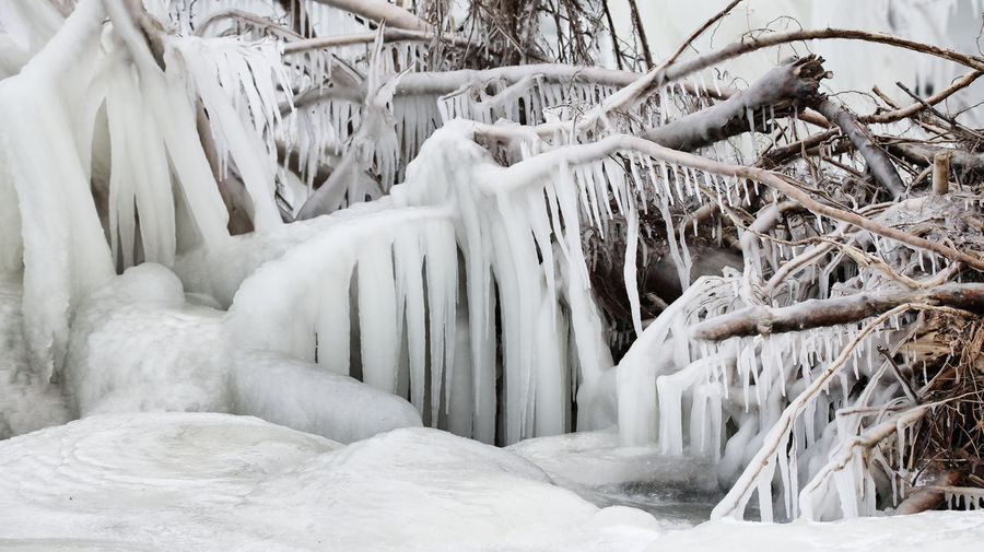 Close-up of icicles against plants