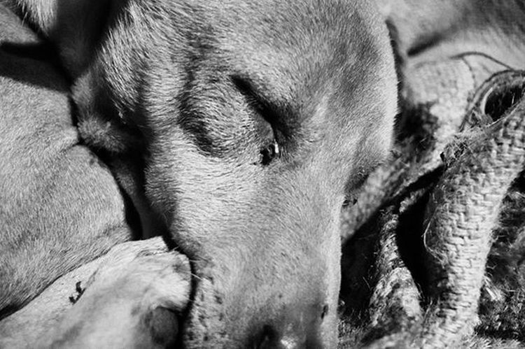 """Animals have come to mean so much in our lives. We live in a fragmented and disconnected culture. Politics are ugly, religion is struggling, technology is stressful, and the economy is unfortunate. What's one thing that we have in our lives that we can depend on? A dog loving us unconditionally, every day, very faithfully.""""He is your friend, your partner, your defender, your dog. You are his life, his love, his leader. He will be yours, faithful and true, to the last beat of his heart. You owe it to him to be worthy of such devotion."""" Dogs Nikon Nikond5300 Nikonontop Nikonshit Streetsofdelhi Ok_bye"""