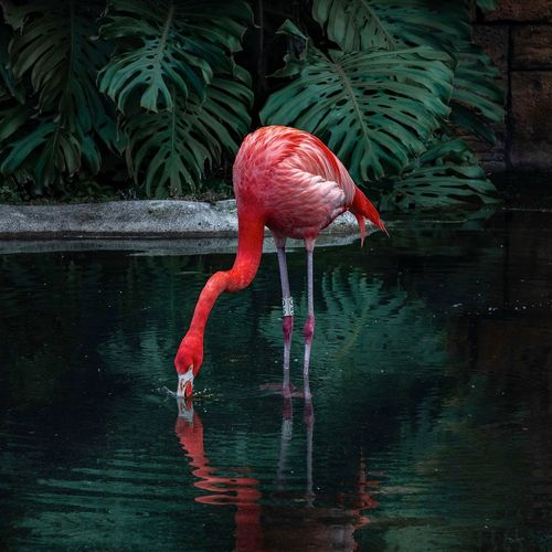 Flamingo colors Green Pond Water Orange Color Photo Wildlife & Nature Water Animal Animal Themes Bird One Animal Vertebrate No People Flamingo Nature Red Waterfront Animal Wildlife Motion Outdoors My Best Photo
