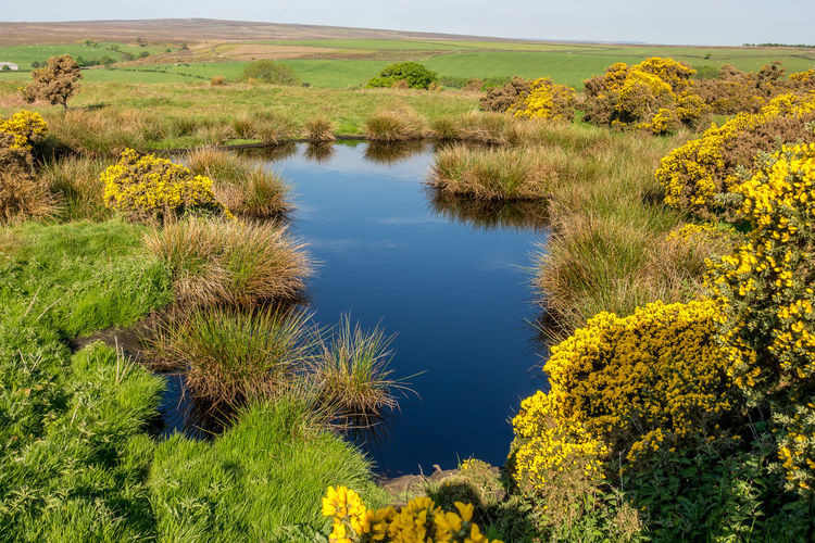 North Yorkshire North Yorkshire Moors Yorkshire Dales Yorkshire Countryside Farmland Field Fields Plant Beauty In Nature Tranquility Tranquil Scene No People Environment Landscape Green Color Idyllic Outdoors Water Scenics - Nature Growth Nature Lake Non-urban Scene Sky