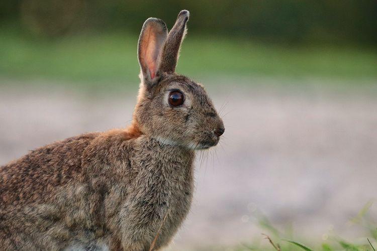rabbit EyeEm