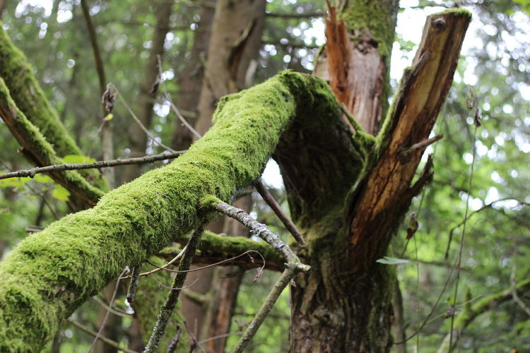 Tree Branch Reptile Tree Trunk Chameleon Forest Perching Close-up Green Color Moss Fallen Tree Dead Tree Plant Bark Bark Camouflage Rainforest
