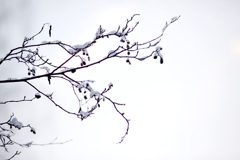 Tree Plant Branch Bare Tree Sky No People Beauty In Nature Low Angle View Nature Tranquility Outdoors Day Clear Sky Twig Silhouette Tranquil Scene Scenics - Nature Growth Cold Temperature Dead Plant Holiday Moments