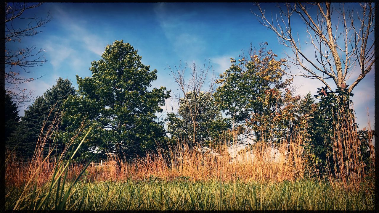 tree, growth, nature, flora, landscape, field, vegetation, grass, summer, sky, no people, outdoors, beauty in nature, day