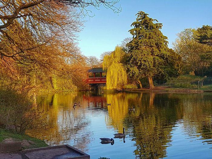Springtime Water Tree Reflection