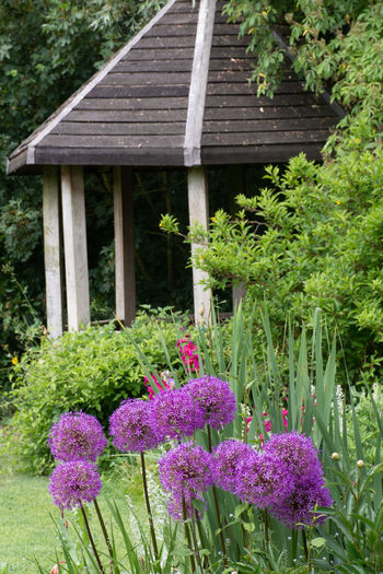 Small English Summer House with Aliums in Foreground Alium Architecture Beauty In Nature Built Structure Flower Flowering Plant Formal Garden Garden Ornamental Garden Outdoors Plant Purple Flower Purple Flowers Summerhouse