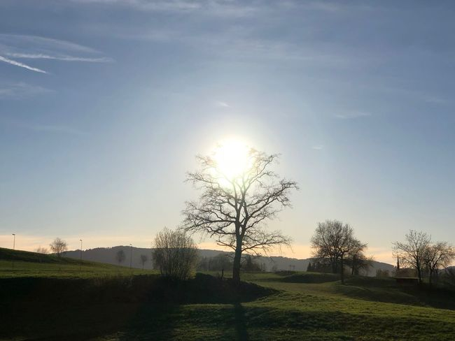 Beauty In Nature Bright Field Growth Landscape Nature No People Outdoors Plant Scenics - Nature Sky Sun Sunlight Sunset Tranquil Scene Tranquility Tree