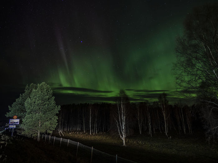 Aurora over Ånge, Sweden Aurora Borealis Northern Lights Trees Olympus OM-D E-M10 Mark II Nightphotography Nightshot Deer Animals Sign Green Color Scenics - Nature Beauty In Nature Tranquil Scene Tranquility Star - Space Sky Majestic Landscape Space And Astronomy