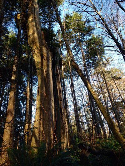 Tree TreePorn
