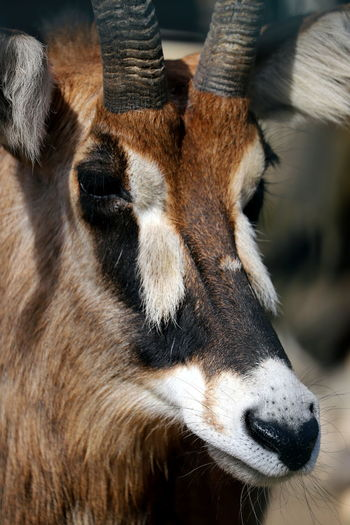 Close-up of a animal looking away