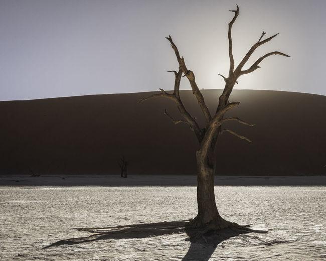 A silhouette of a dead tree in a salt pan as the sun rises. Arid Climate Bare Tree Beauty In Nature Branch Clear Sky Climate Day Dead Plant Land Nature No People Non-urban Scene Outdoors Plant Scenics - Nature Sky Tranquil Scene Tranquility Tree Tree Trunk Trunk Water
