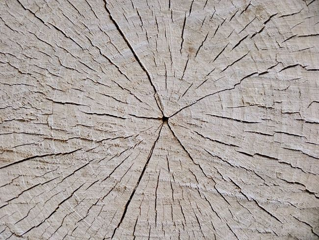 Tree Ring Backgrounds Full Frame Textured  Concentric Cracked Tree Stump Close-up