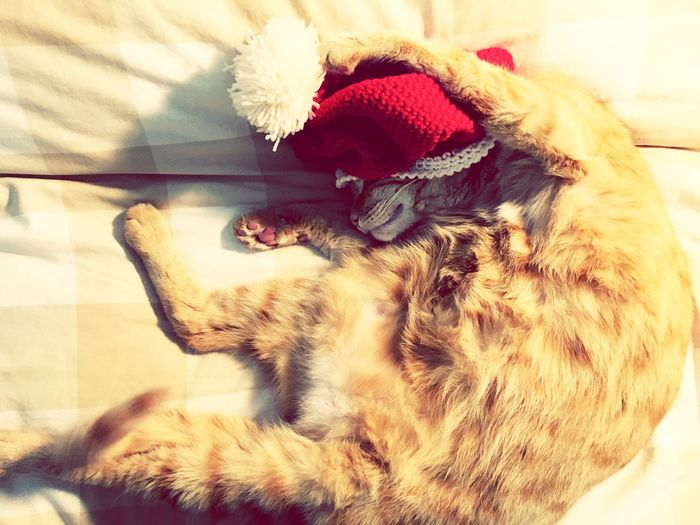 Bizet Cat Lovers Xmas Time First Eyeem Photo