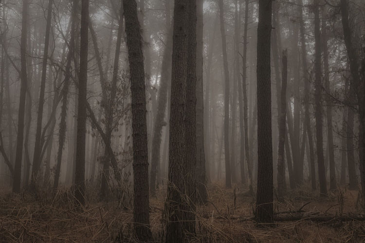 Foggy day Beauty In Nature Eyem Best Shots Eyem Best Shots Nature_collection Eyem Nature Lovers  Eyemphotography Fog Foggy Foggy Day Foggy Morning Forest Forest Photography Landscape Mistery Mystic Nature Nature Photography Nature_collection Naturelovers Naturephotography Scenics Tree Trees Wildlife Wildlife Photography WoodLand