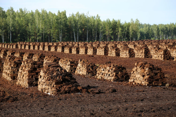 Peat Stacks With Trees Against Clear Sky