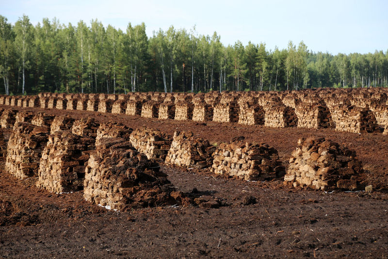 peat is stacked in rows waiting for transport in a forest in Latvia. Travelling The Baltic States Latvia Wald Und Torf Torffeld Swamp Fossil Fuel Torfballen Fossil Fuels Evening Light Heating Period Agriculture Peat Bog Lagerung Harvesting Peat Peat Mining Peat Renewable Energy Peat Field Peat Extraction Torfabbau Bog Peat Travelling Brennstoff Torffabrik Lettland