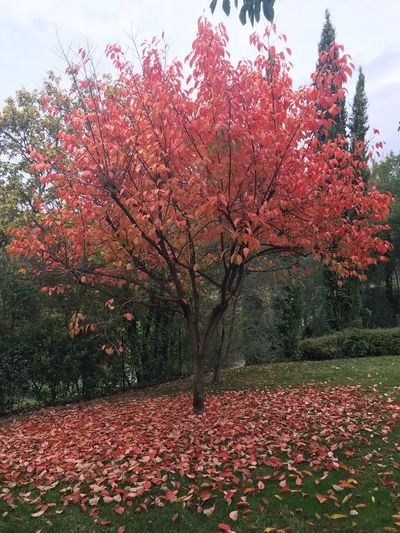 Autumn Nature Beauty In Nature Change Tree Leaf Flower Growth Scenics Tranquility Outdoors No People Fragility Red Day Tranquil Scene Park - Man Made Space Landscape Sky Plant
