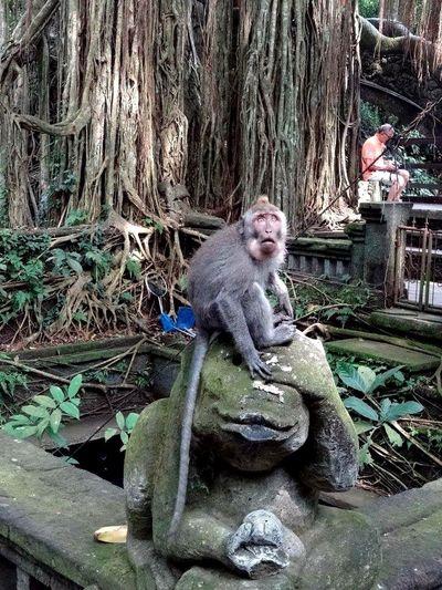 who?? me???!! Monkey Funny Faces Animal Ubud, Bali Monkey Temple Cheese! Travel Photography Amazing
