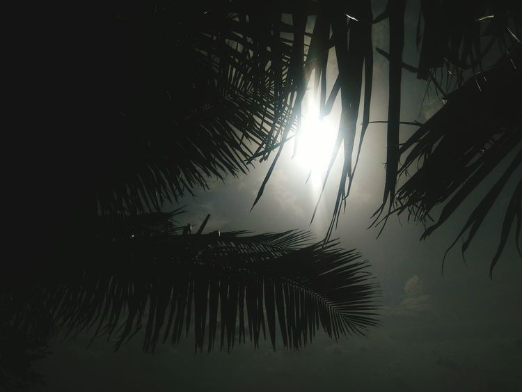 Tree No People Reflection Sky Outdoors Palm Tree Beauty In Nature