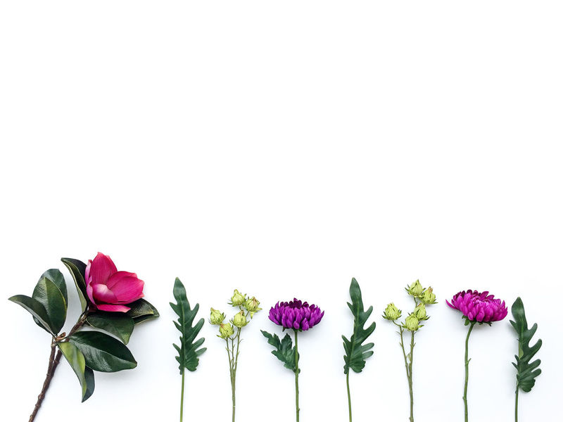Arrangement Art & Craft Art & Design Bloom Botany Bouquet Bunch Of Flowers Colorful Copy Space Creativity Flower Flower Arrangement Freshness Green Color Love Multi Colored Nature Pink Color Poster Romantic Wallpaper Beautiful White Background The Color Of Business