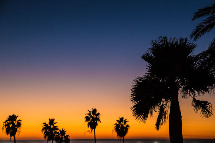 Beauty In Nature Gradient Gradiented Sky Nature No People Outdoors Palm Tree S Santa Monica Santa Monica Beach Scenics Sky Sunset Tree