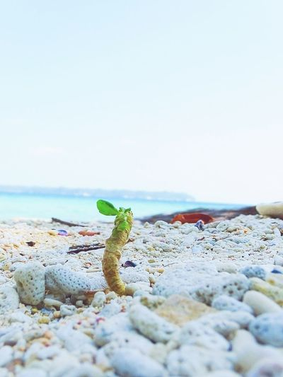 Life Finds A Way Blue Blue Sky Water Andaman Sea Andaman And Nicobar Islands Andaman Andaman & Nicobar Islands Andaman Islands Portblair Portblair Diaries India Sea Branch Twig Beach Beachphotography Corals Coralstone Life Water Sea Beach Pebble Sea Life Sky Bare Tree Pebble Beach