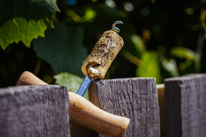 Beauty In Nature Blue By Ivan Maximov Close-up Composition Corkscrew Day Focus On Foreground Nature No People Outdoors Perching Selective Focus Tokaji Wildlife Wine Stoppers Wood - Material Wooden Wooden Post