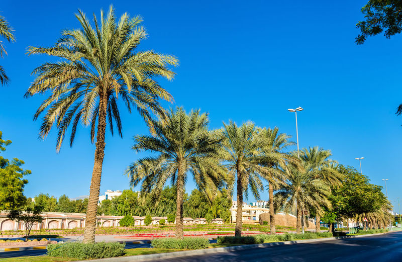 Palm trees by street against clear blue sky