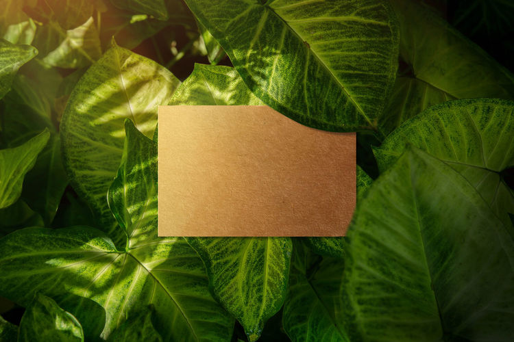 Business card mockup, Craft recycle paper, Top view, Blank space for logo identity or text copy, Tropical Nature leaf layer as background Business Card Close-up Craft Day Forest Fragility Freshness Green Color Indoors  Leaf Mockup Nature No People Paper Present Recycle Tropical
