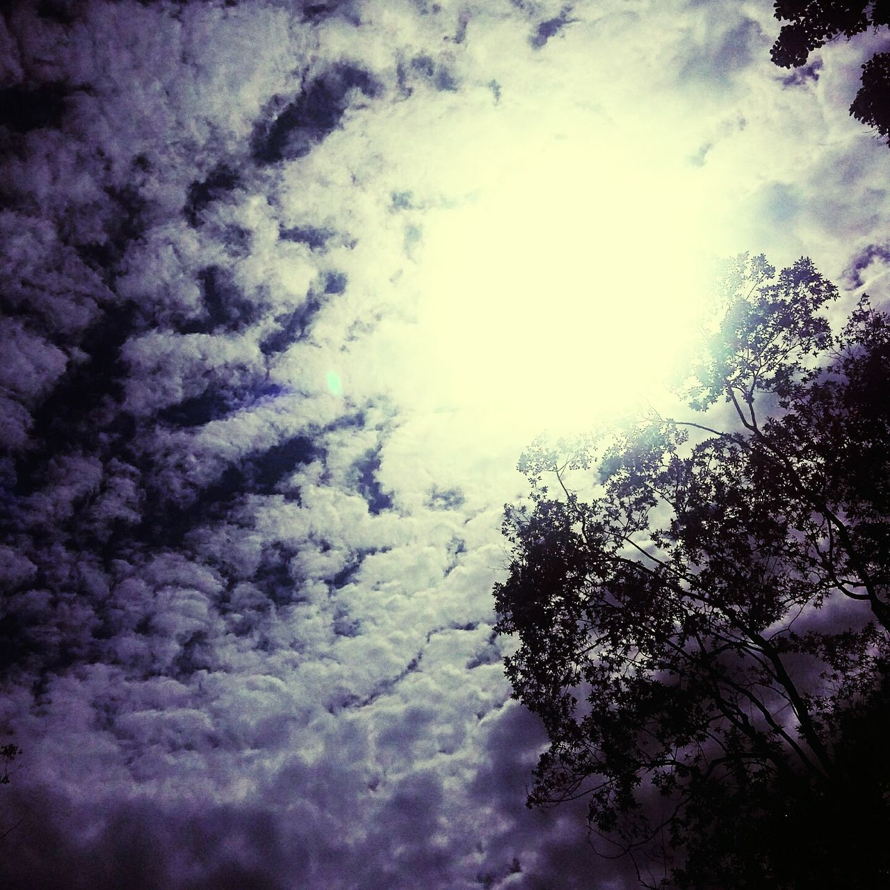 low angle view, nature, sky, beauty in nature, cloud - sky, cloudscape, tree, no people, scenics, day, outdoors, tranquility, backgrounds