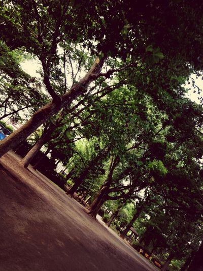 しょうぶ沼公園