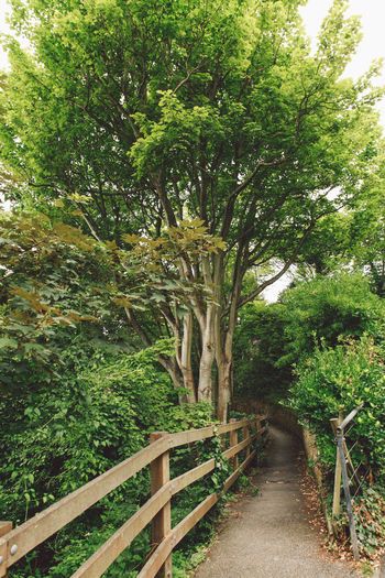 Beauty In Nature Branch Diminishing Perspective Footpath Forest Green Color Growth Long Narrow Narrowpath Nature Path Pathway Plant Railing The Way Forward Tranquil Scene Tranquility Tree Vanishing Point Walkway Wood - Material